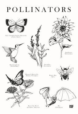 pollinators-2